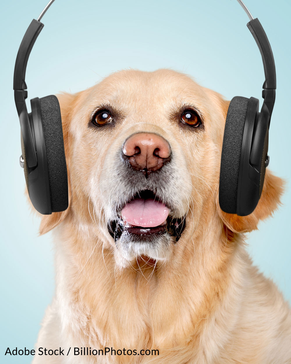 Dogs hear sounds in frequency ranges we don't even recognize as humans.