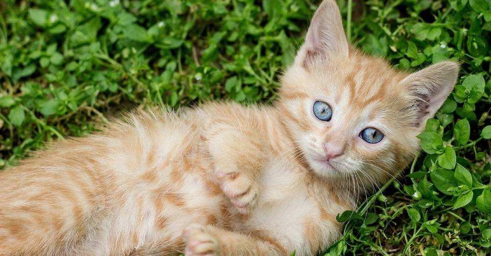 Family Takes in Stray Kittens to Keep Them Safe, and They End Up with Two More