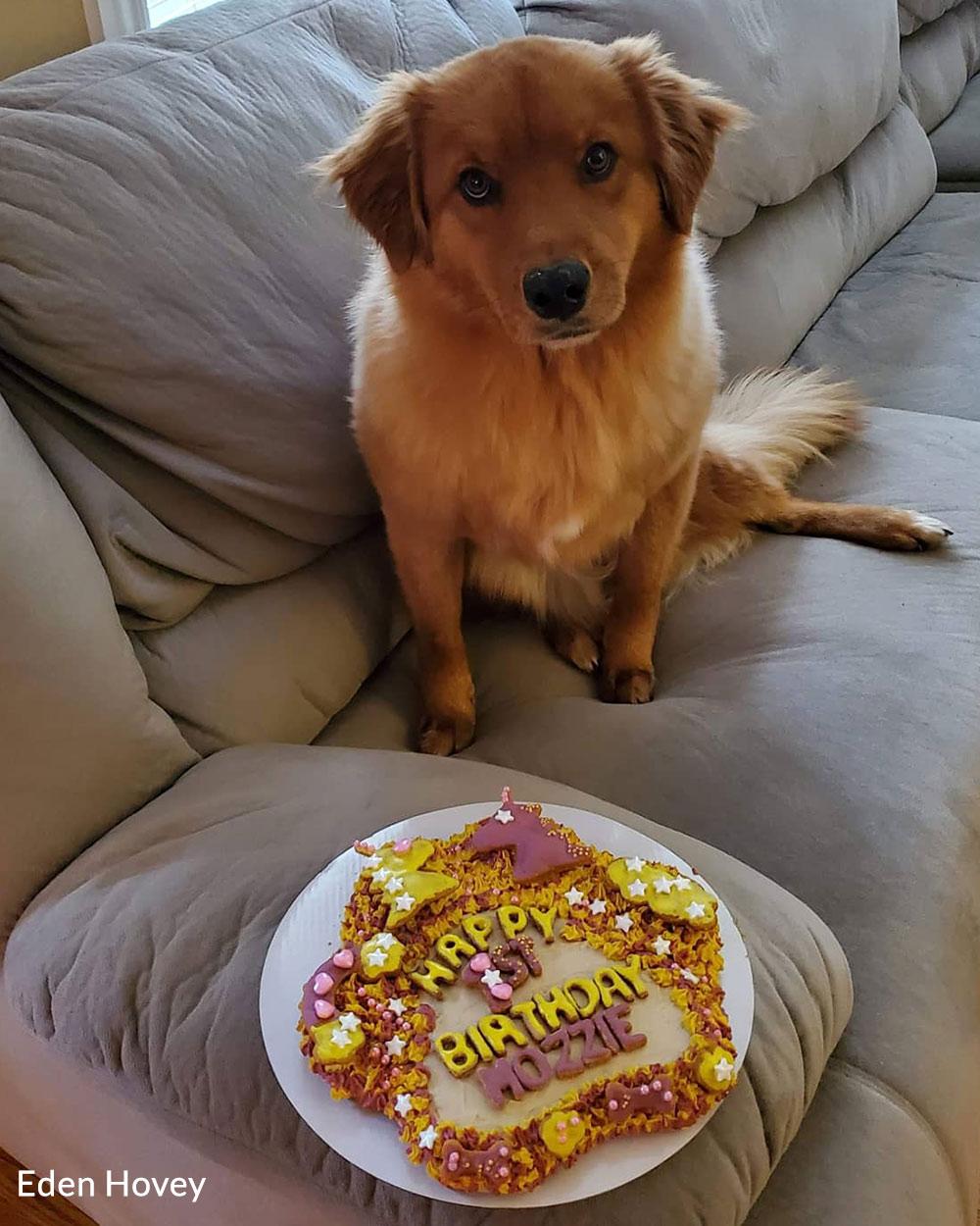 Happy birthday Mozzie!