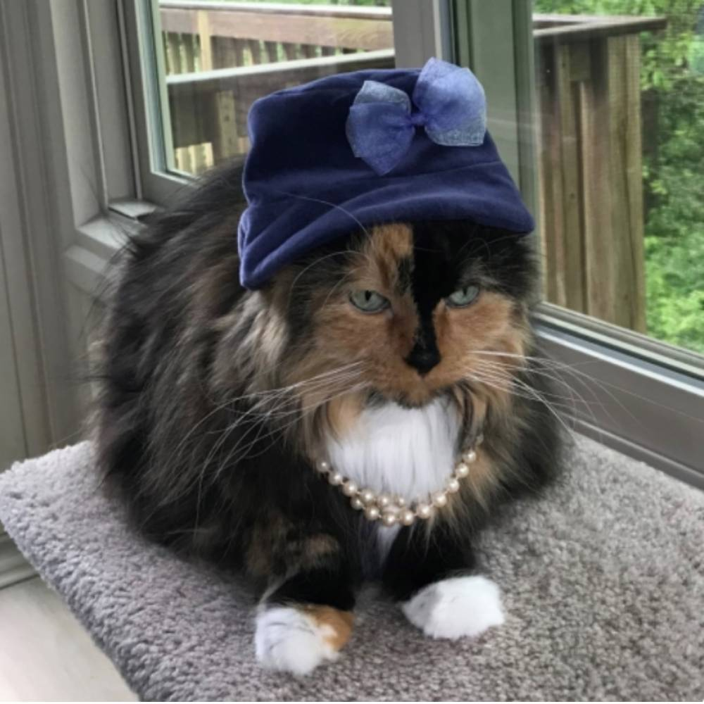 Michigan Cat Made History When She Was Elected Mayor. Now She's Running For Re-Election