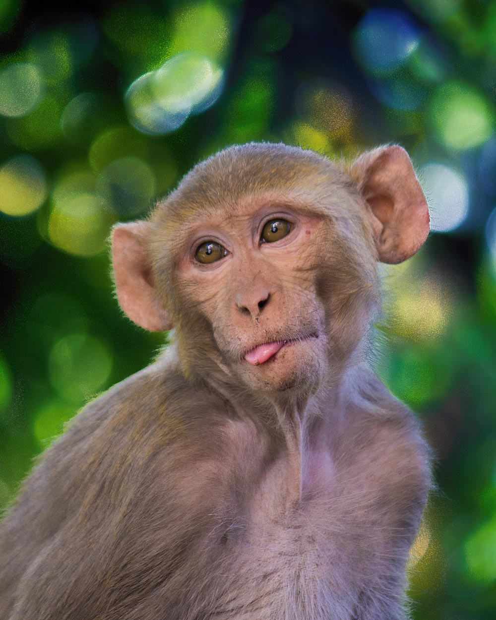 Source: Pixabay Research on other serious diseases has slowed as COVID research gets the majority of monkey test subjects.