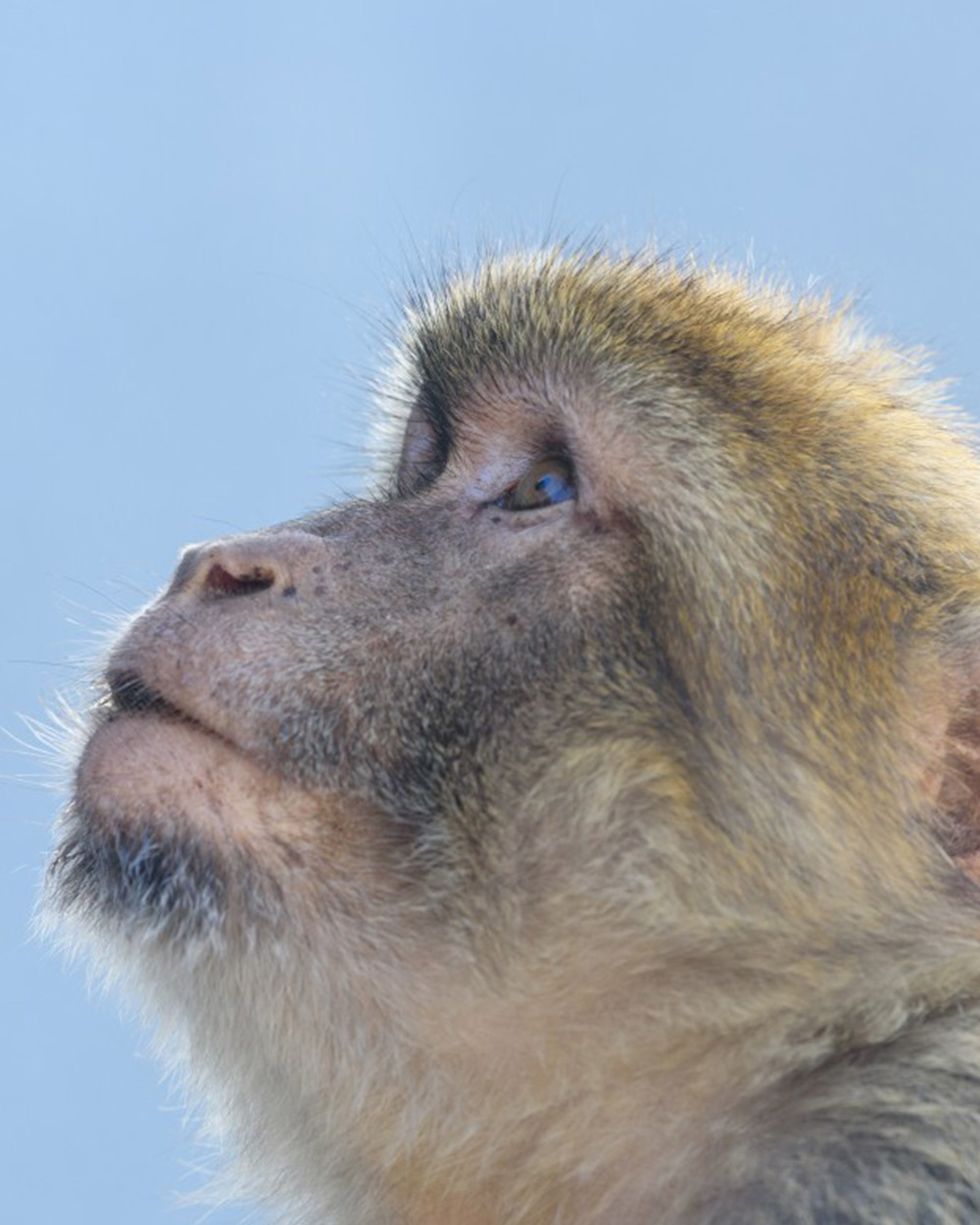 Macaques are used for testing vaccines because their biology is so similar to that of humans.