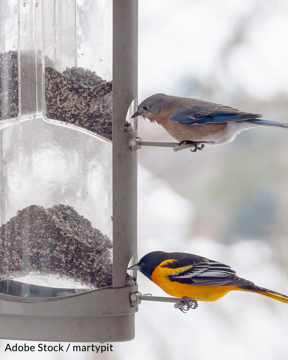 Help protect songbirds, take the Birdbath Pledge!