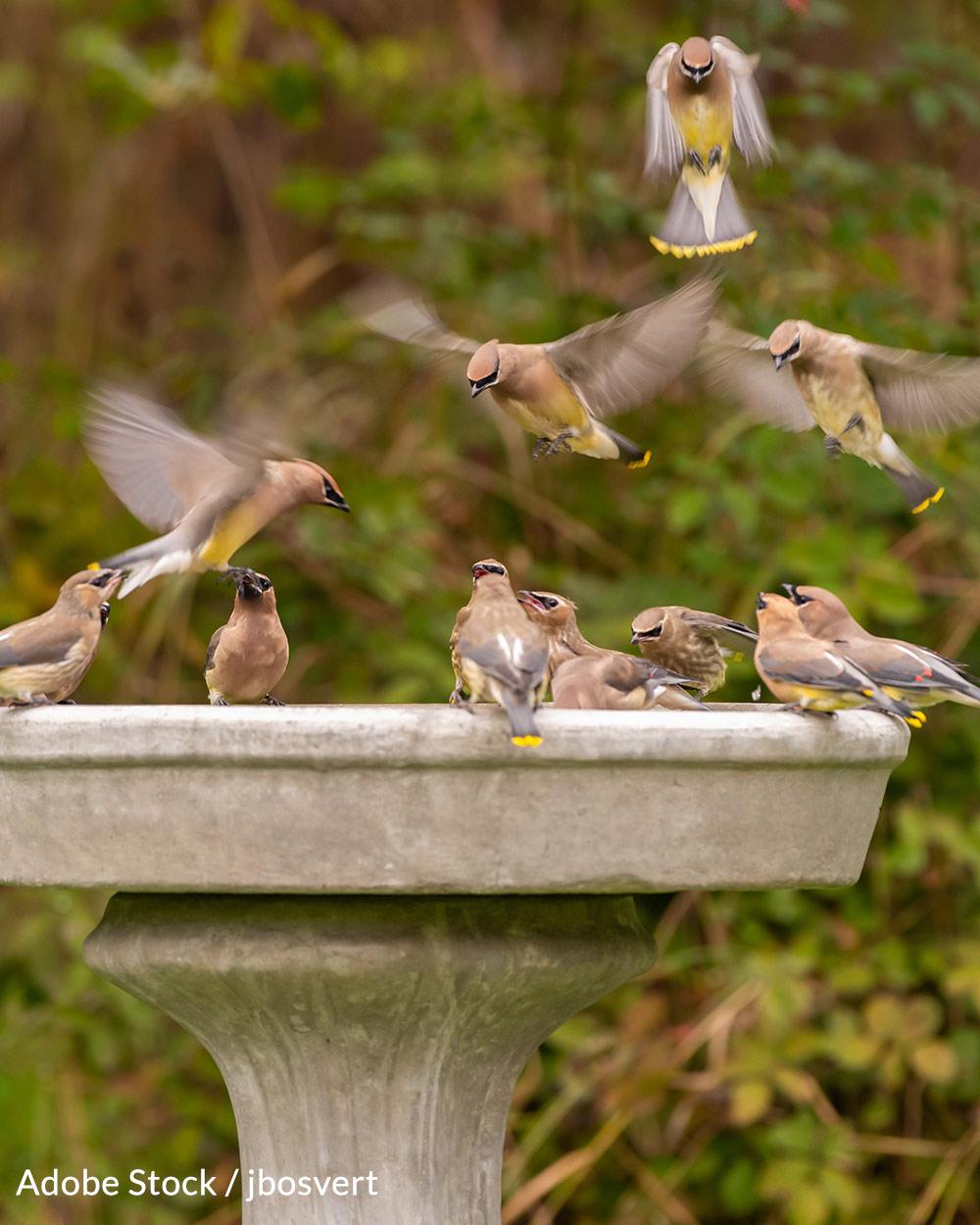 Officials urge bird watchers to keep birdbaths clean, or remove them.