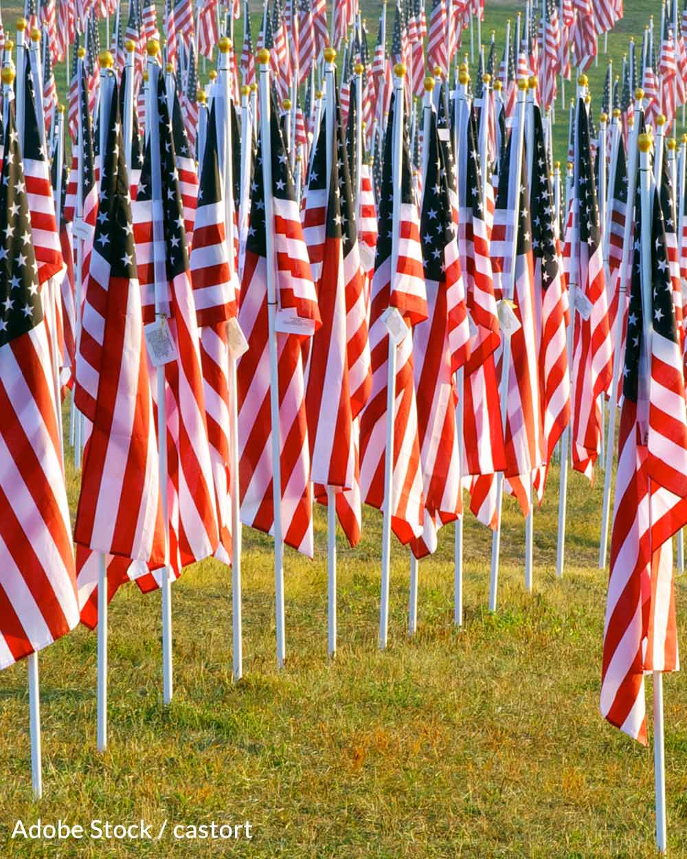 Flags arranged for the victims of 9/11 in the Healing Fields.