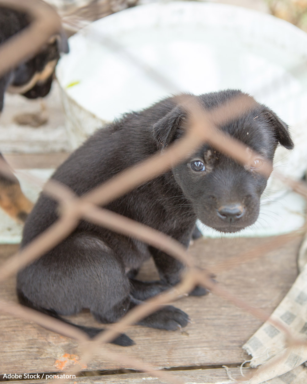 Many puppy mills are relicensed even after multiple AWA violations.
