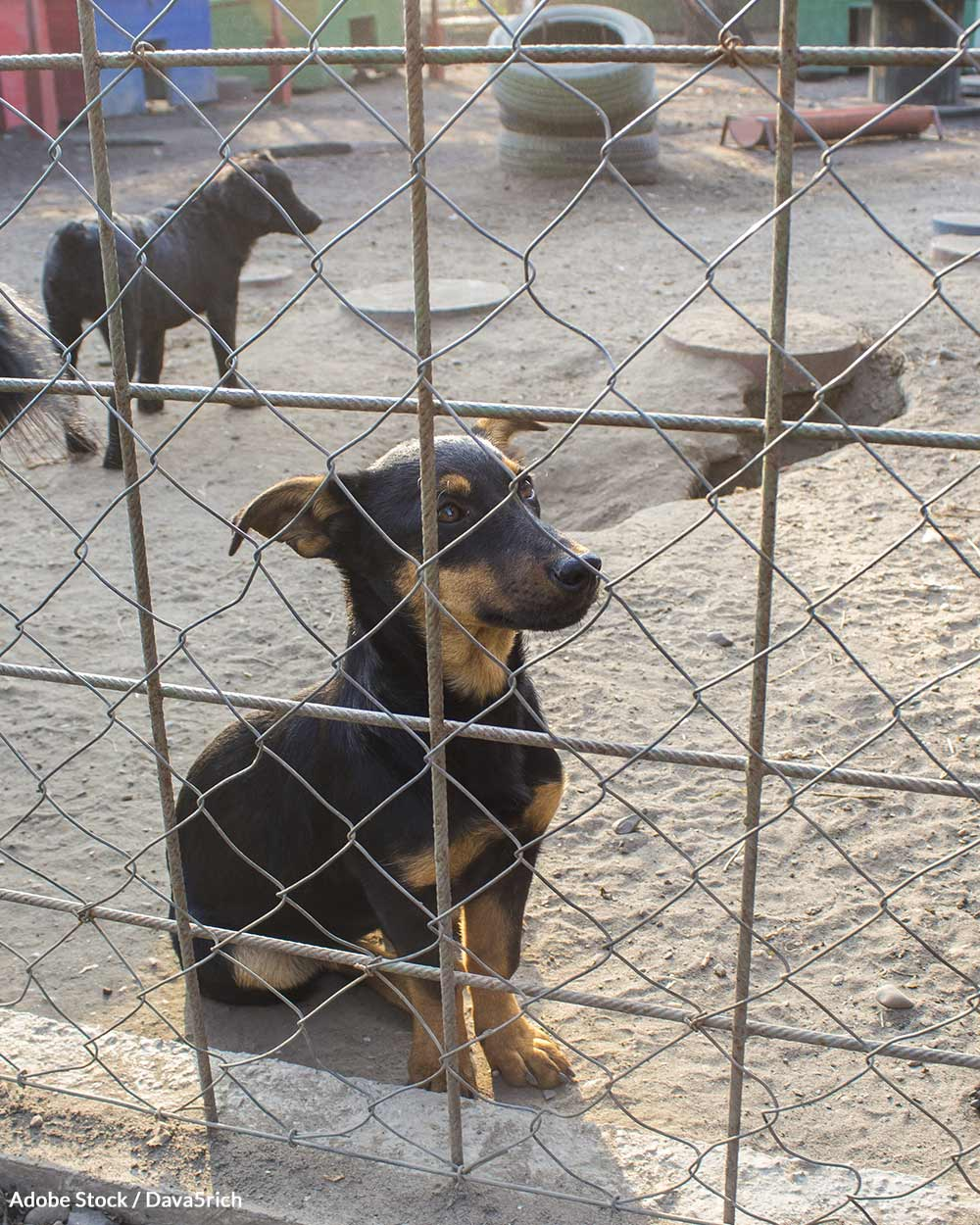Help us put puppy mills out of business once and for all!