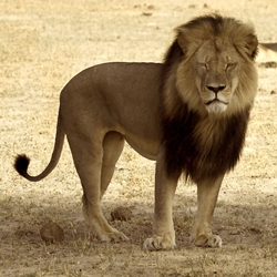 Ban Trophy Hunting Zimbabwe