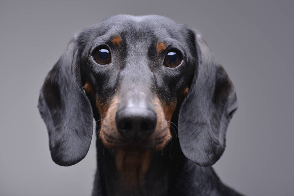 Closeup of a scared dog