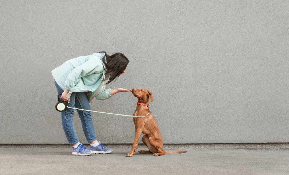 dog being trained by a woman