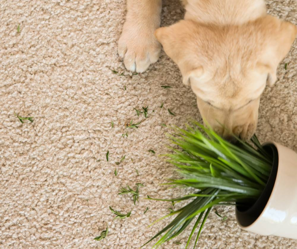 Puppy with plant and broken pot
