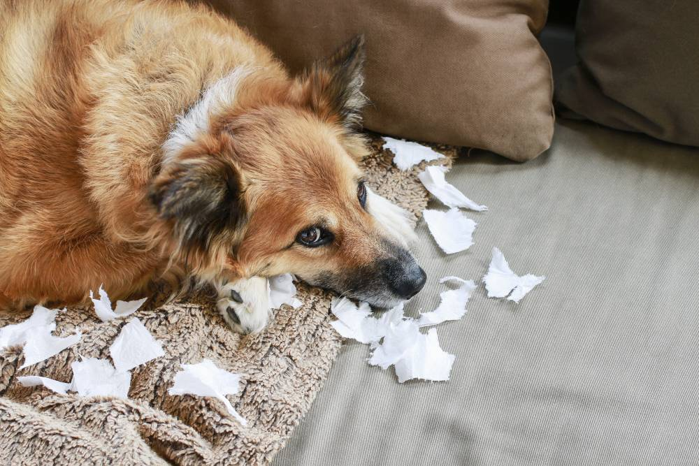 Dog laying in chewed up paper