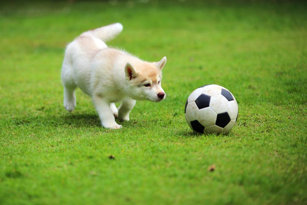 Dog playing with ball outside