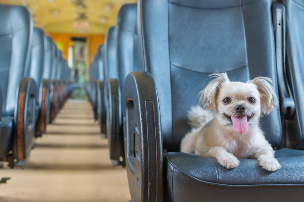 Dog traveling on a train