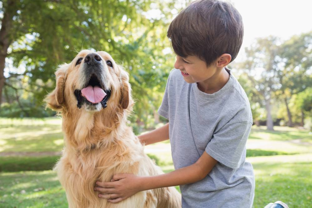 Dog playing with boy outside