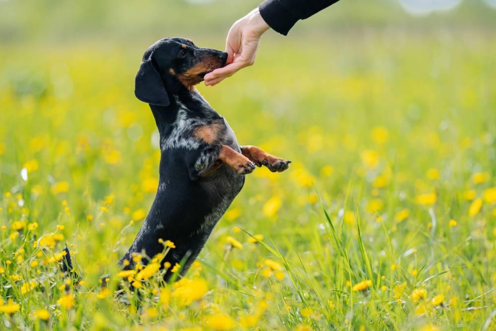 Dog gets treats