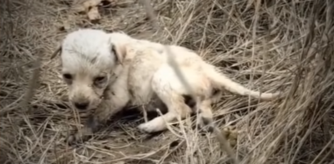 Tiny Puppy Abandoned In A Field Gets A Second Chance At Life