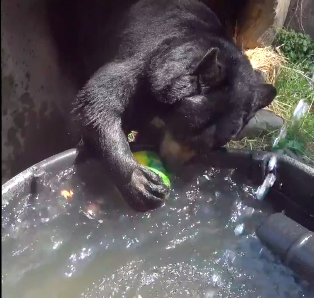 Animals At Oregon Zoo Get Special Treat For National Watermelon Day