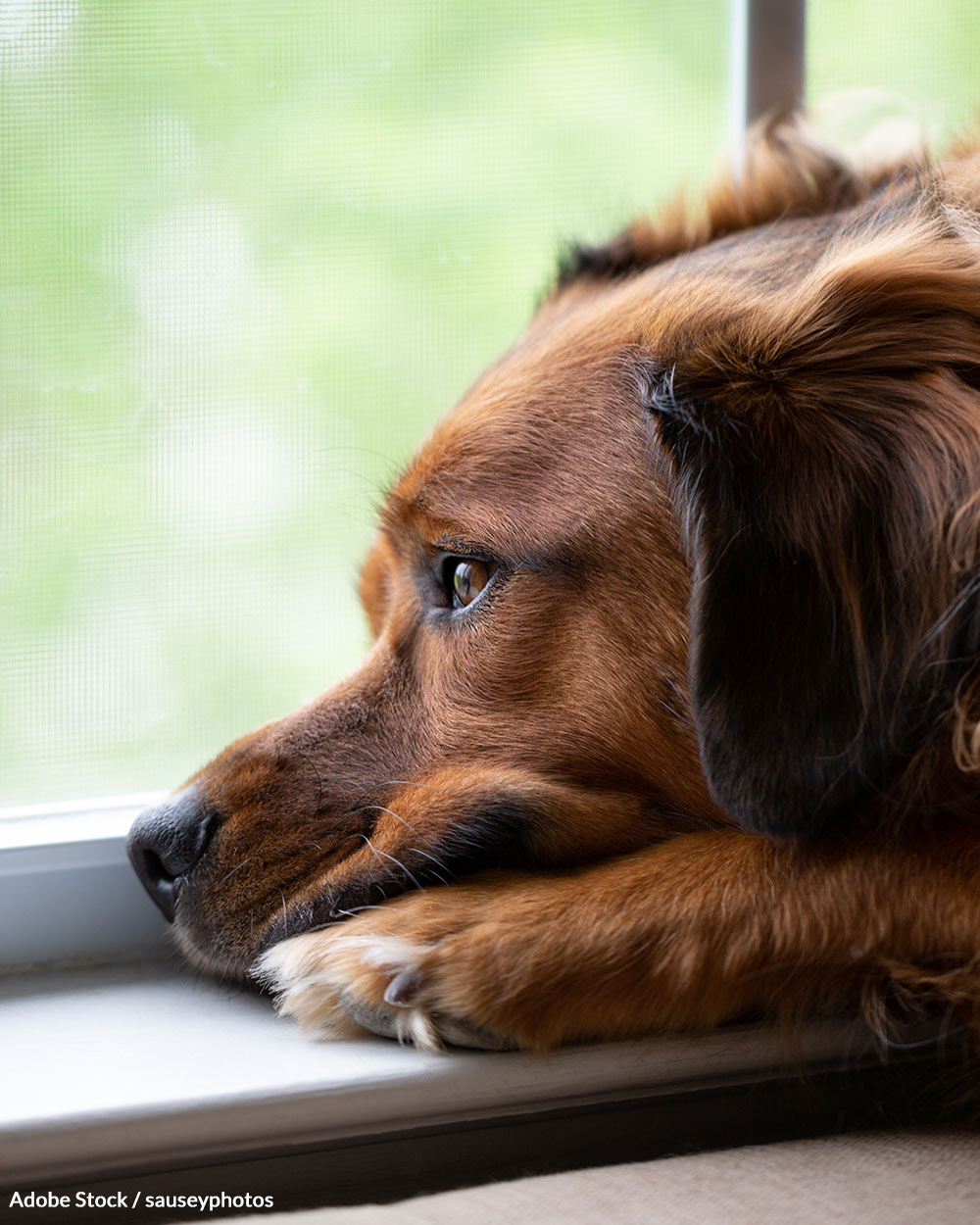 Many pets have been abandoned when families cannot afford rent or mortgage payments.