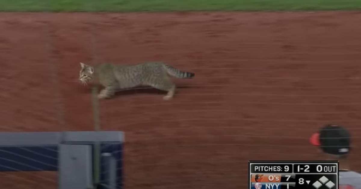 Cat Crashes NY Yankees Baseball Game, Fans Name Him MVP