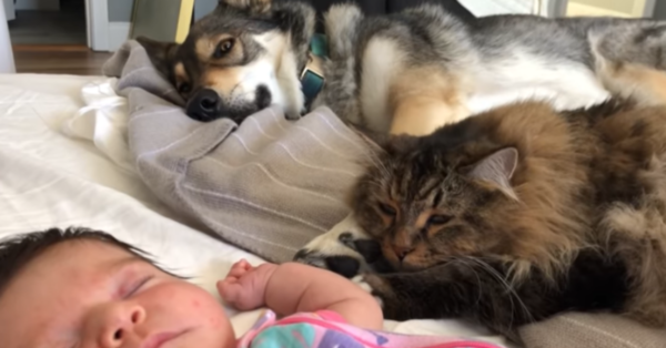 Dog And Cat Become BFFs With Their Baby Sister