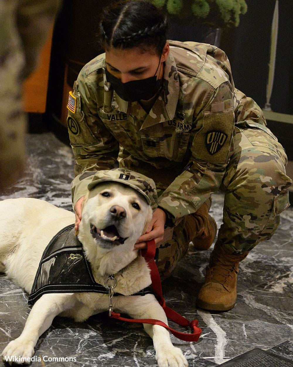 Greater Good Charities partners with Pets for Vets to help heal the emotional wounds of military veterans by pairing each one with a shelter dog specifically matched to his or her personality.