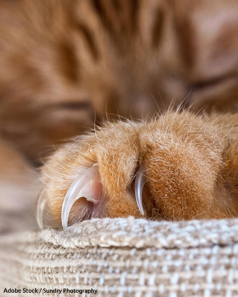 Help us end the barbaric practice of declawing!