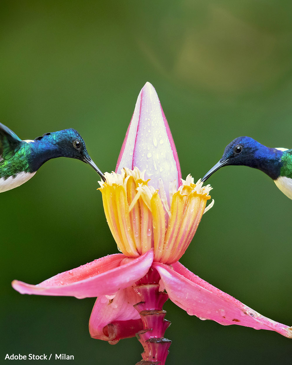 Hummingbird habitats are disappearing as our planet's average temperatures rise.