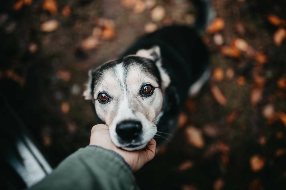 Dog being pet close-up