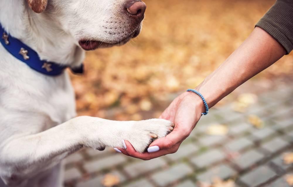 Dog giving woman handshake