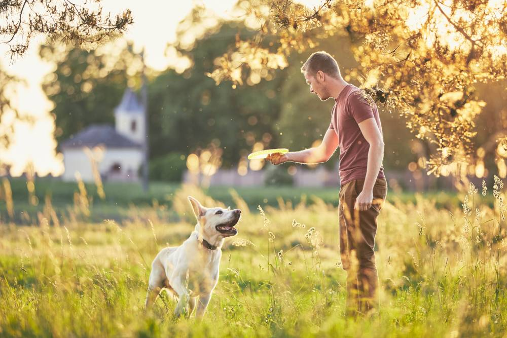 Dog playing Frisbee with a man