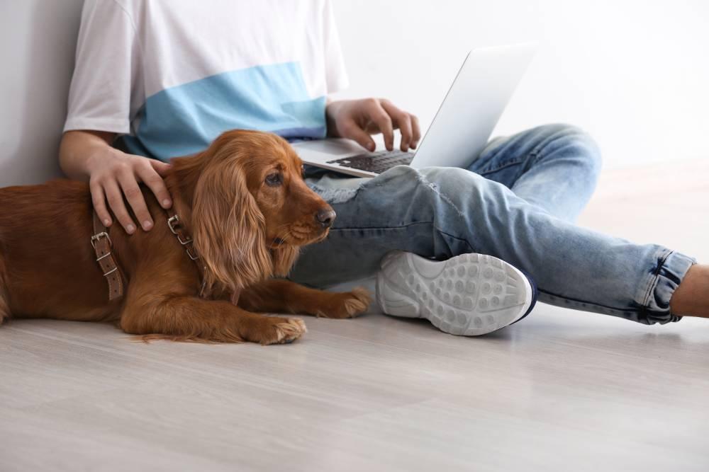Dog sitting with human on computer