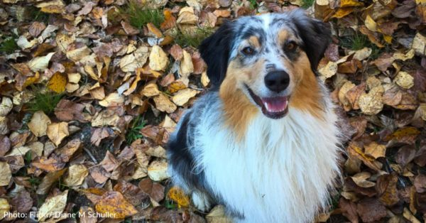 September 22 Is The First Day Of Fall–And The Start Of Your Dog's Favorite Season!