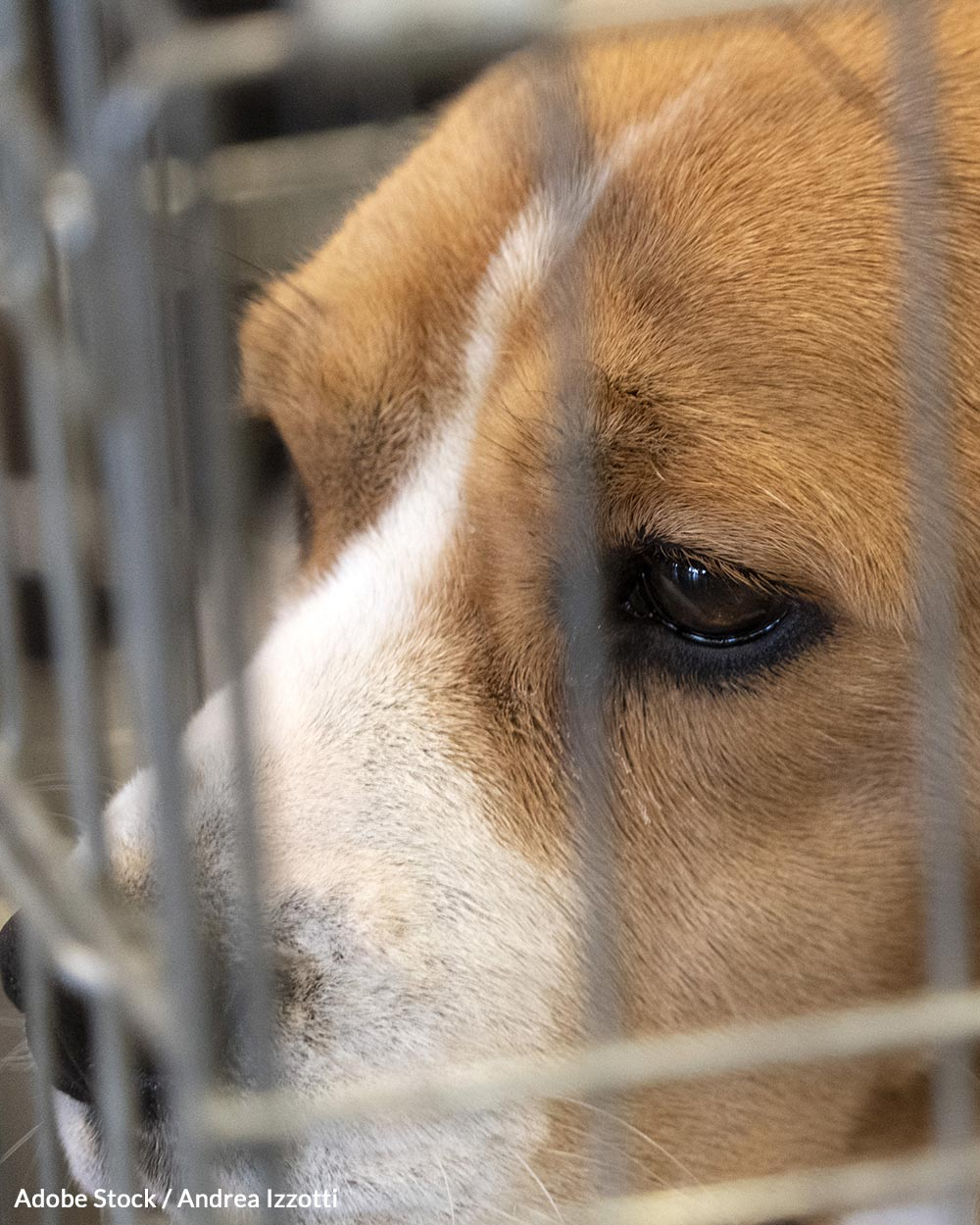 Veterinarians and lawmakers are calling on Wayne State University to eliminate unnecessary animal testing.