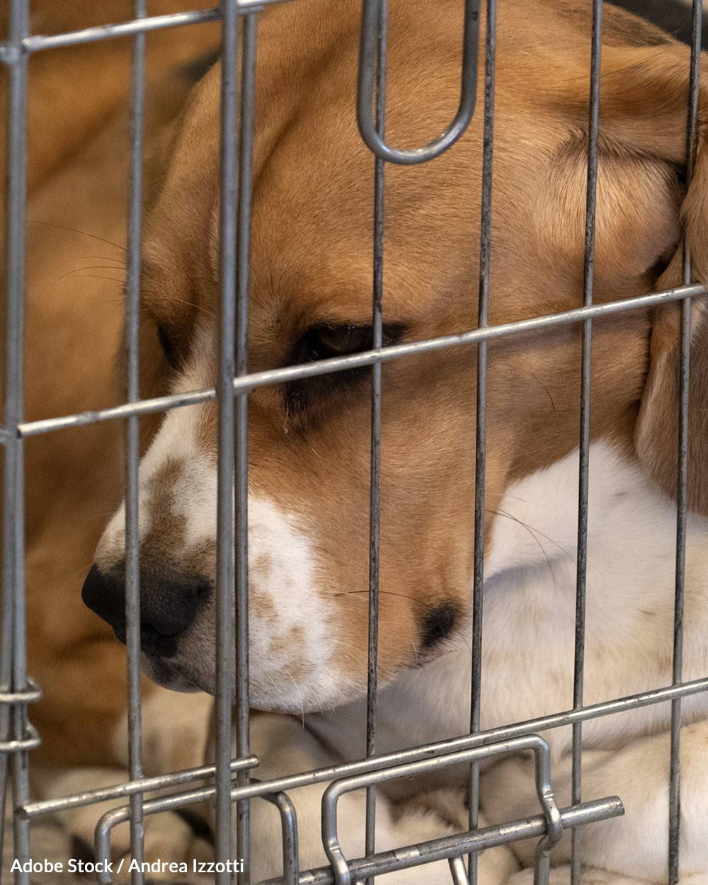 Bills that could reduce unnecessary animal testing need your support!