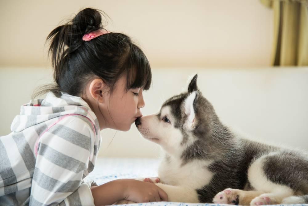 Girl kissing husky puppy