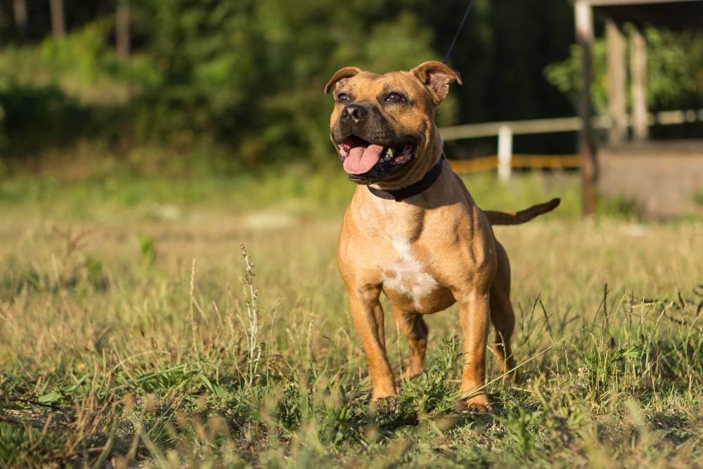 Happy dog running around outside