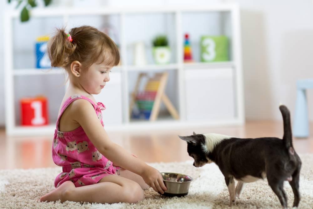 Little girl feeding her dog