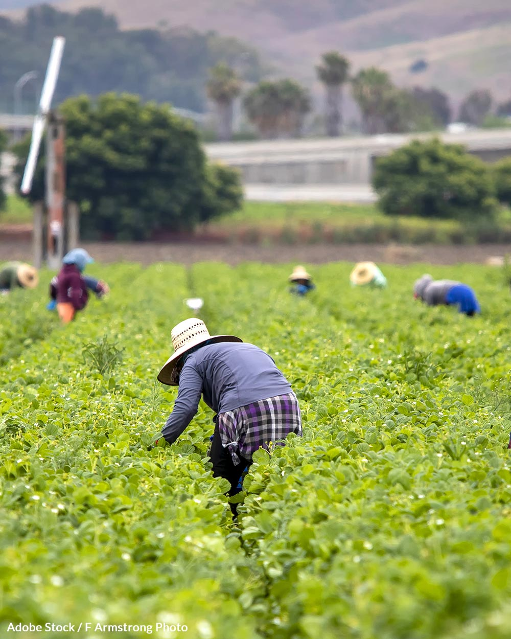 The Asunción Valdivia Heat Illness and Fatality Prevention Act would bring added protections to millions of farmworkers.