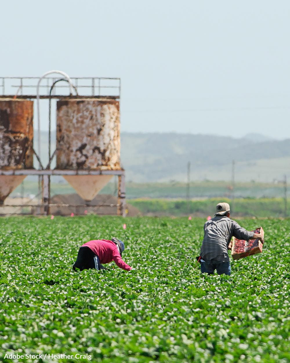 Help us take a stand for farmworkers.