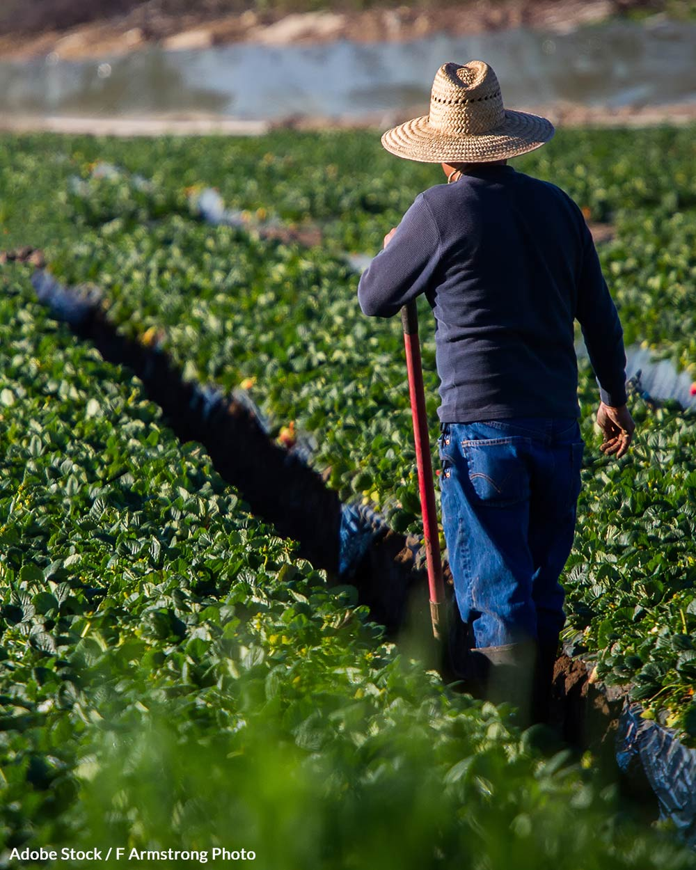 Undocumented workers have few protections in the U.S.