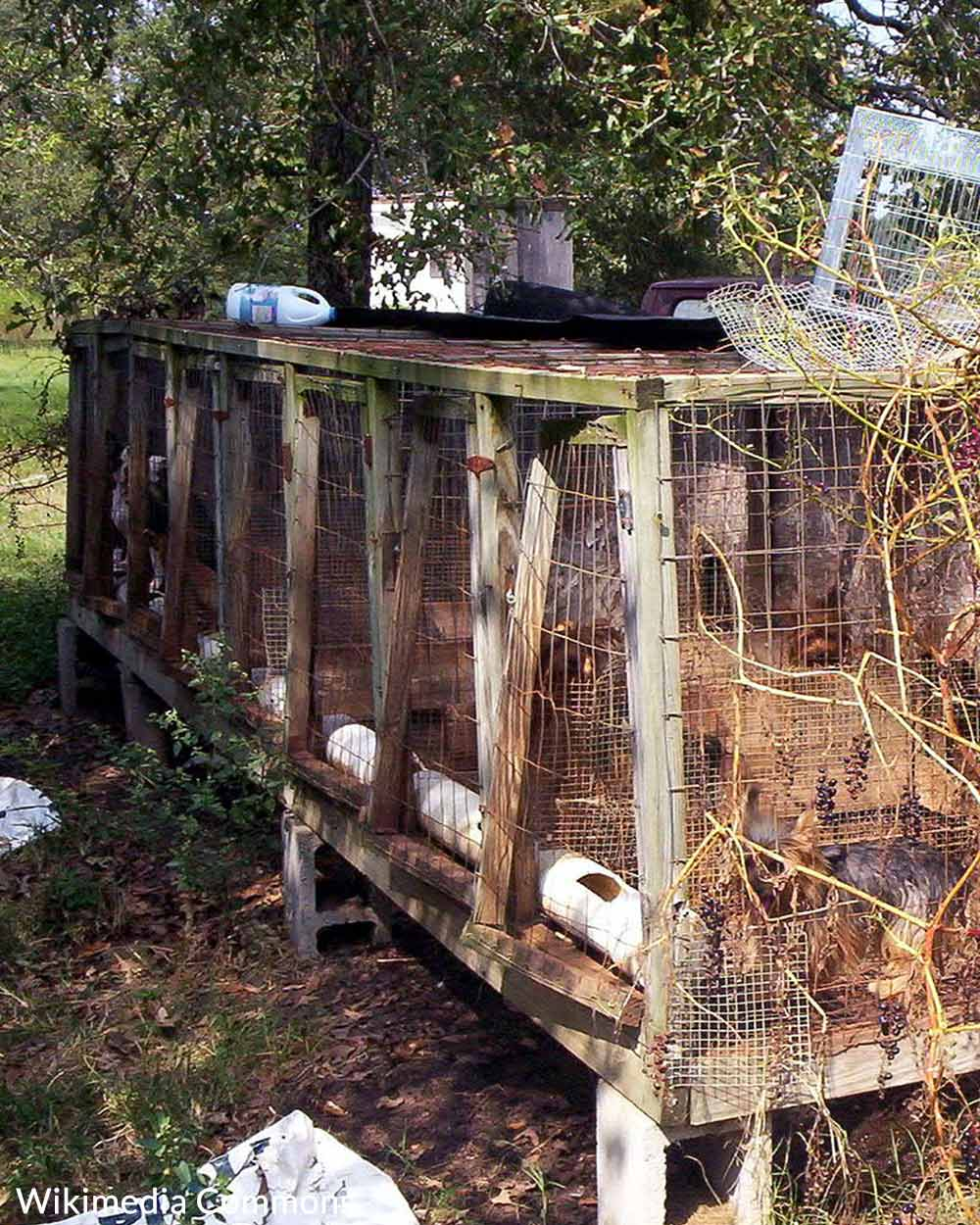 Packed tightly in kennels, animals face a grim existence in puppy mills.