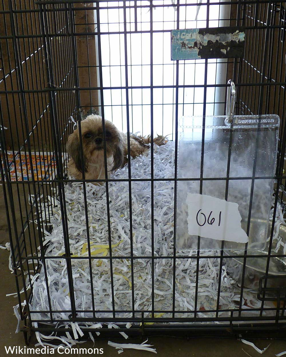 Puppy Mill Awareness day is devoted to raising awareness of the plight of animals in puppy mills.