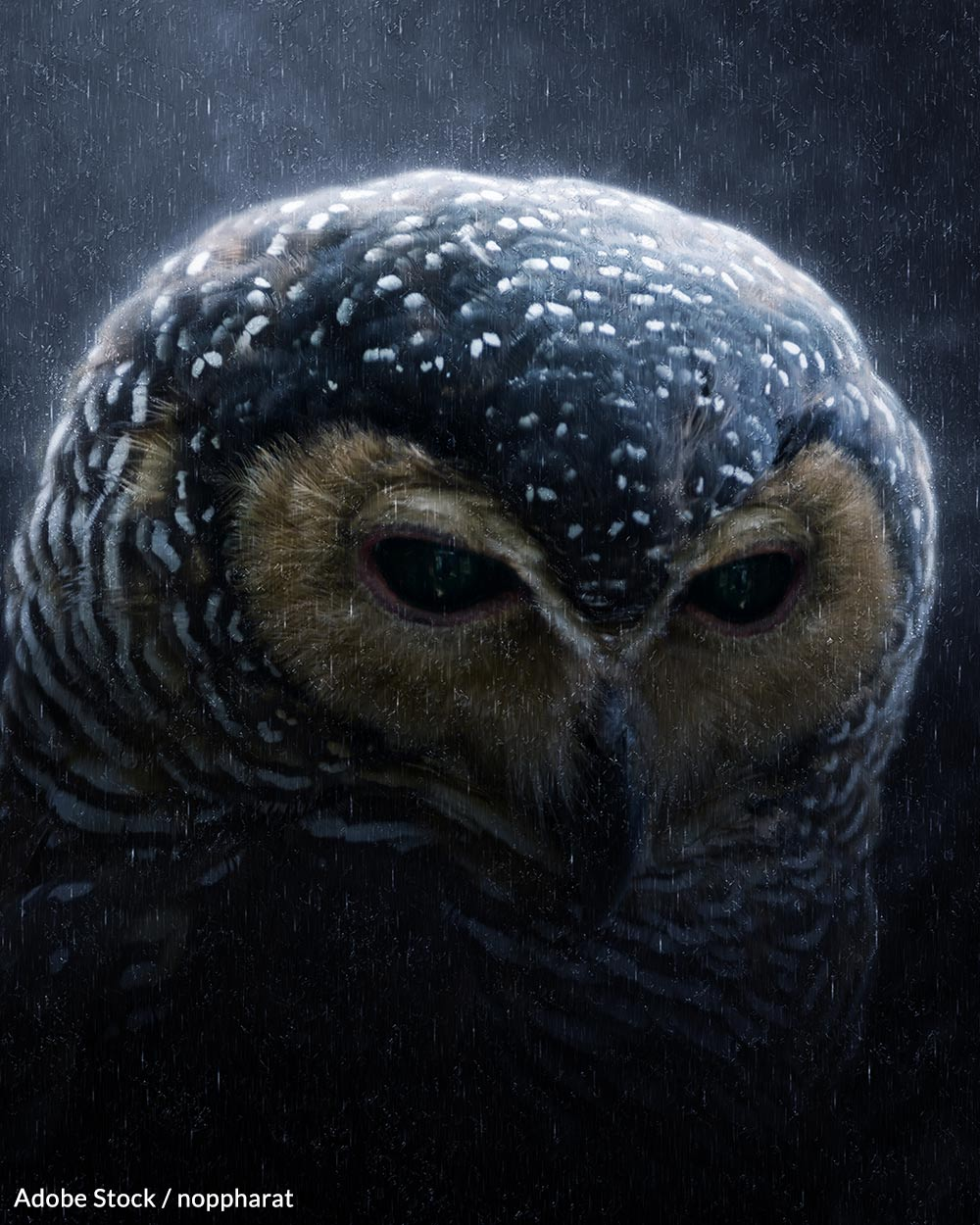 Without intervention, spotted owls could go extinct in a matter of decades.