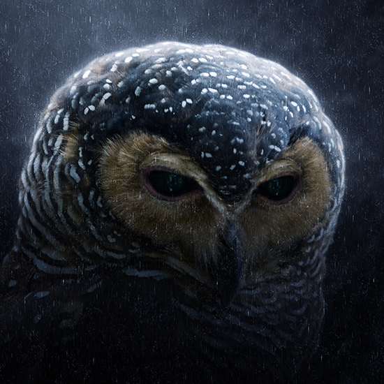 Restore Critical Habitat to the Spotted Owls