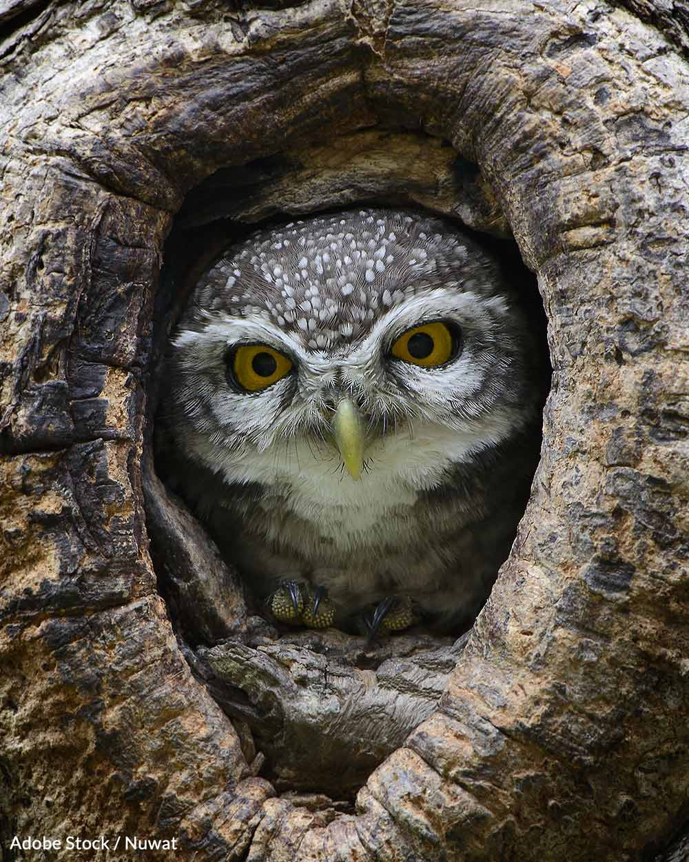 3.4 Million Acres Of Spotted Owl Habitat Could Soon Be Restored