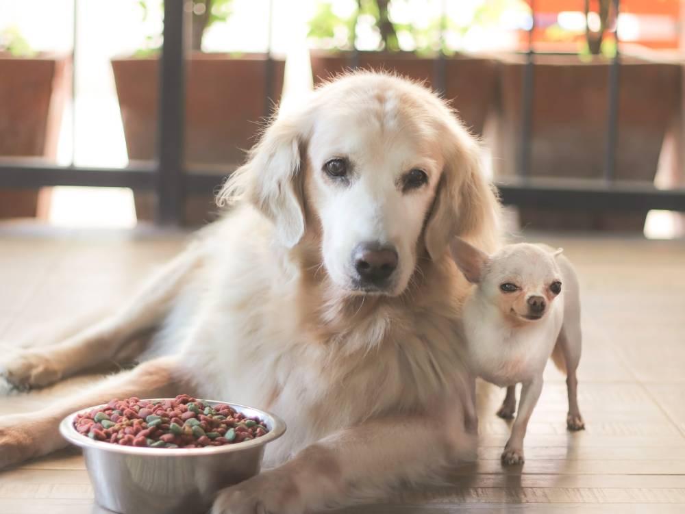 Two dogs enjoying breakfast