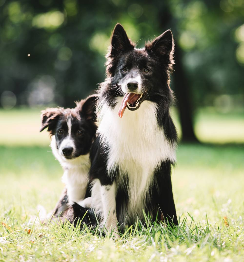 Two dogs in park