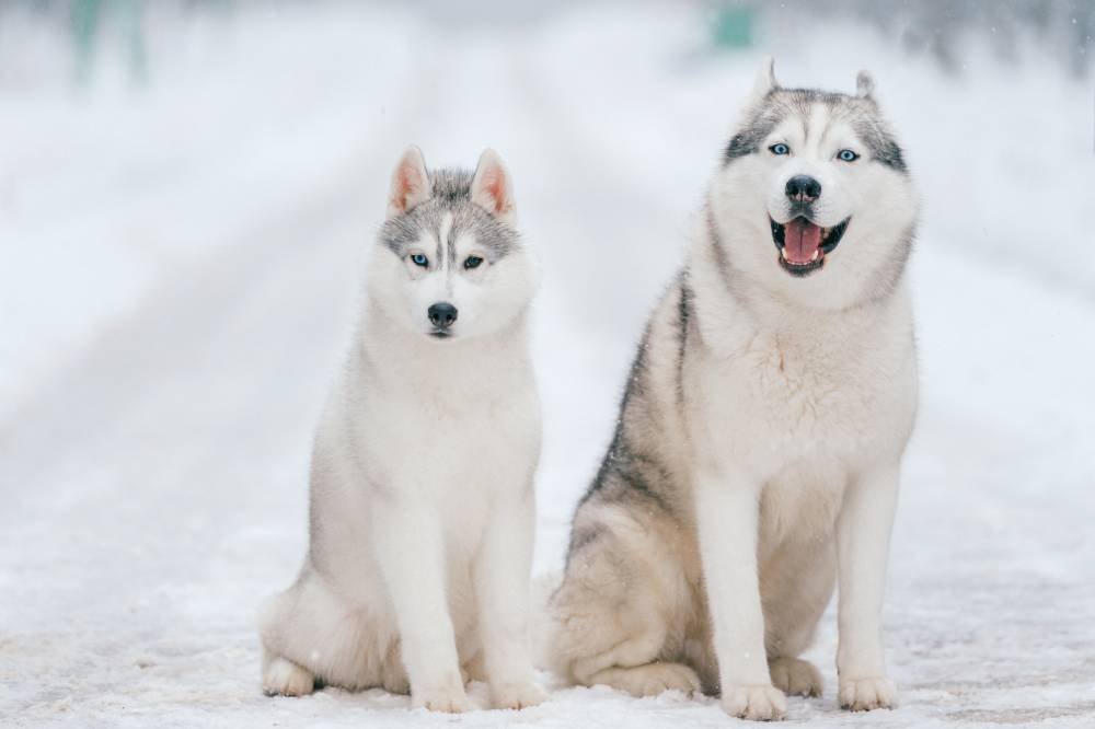 Two dogs out in the snow