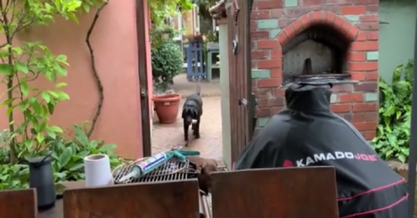 """Woman Trains Dog To Fetch Her A Cocktail Every Time She Says """"Gin O'Clock"""""""